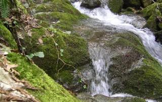 Scorcio del torrente Salice