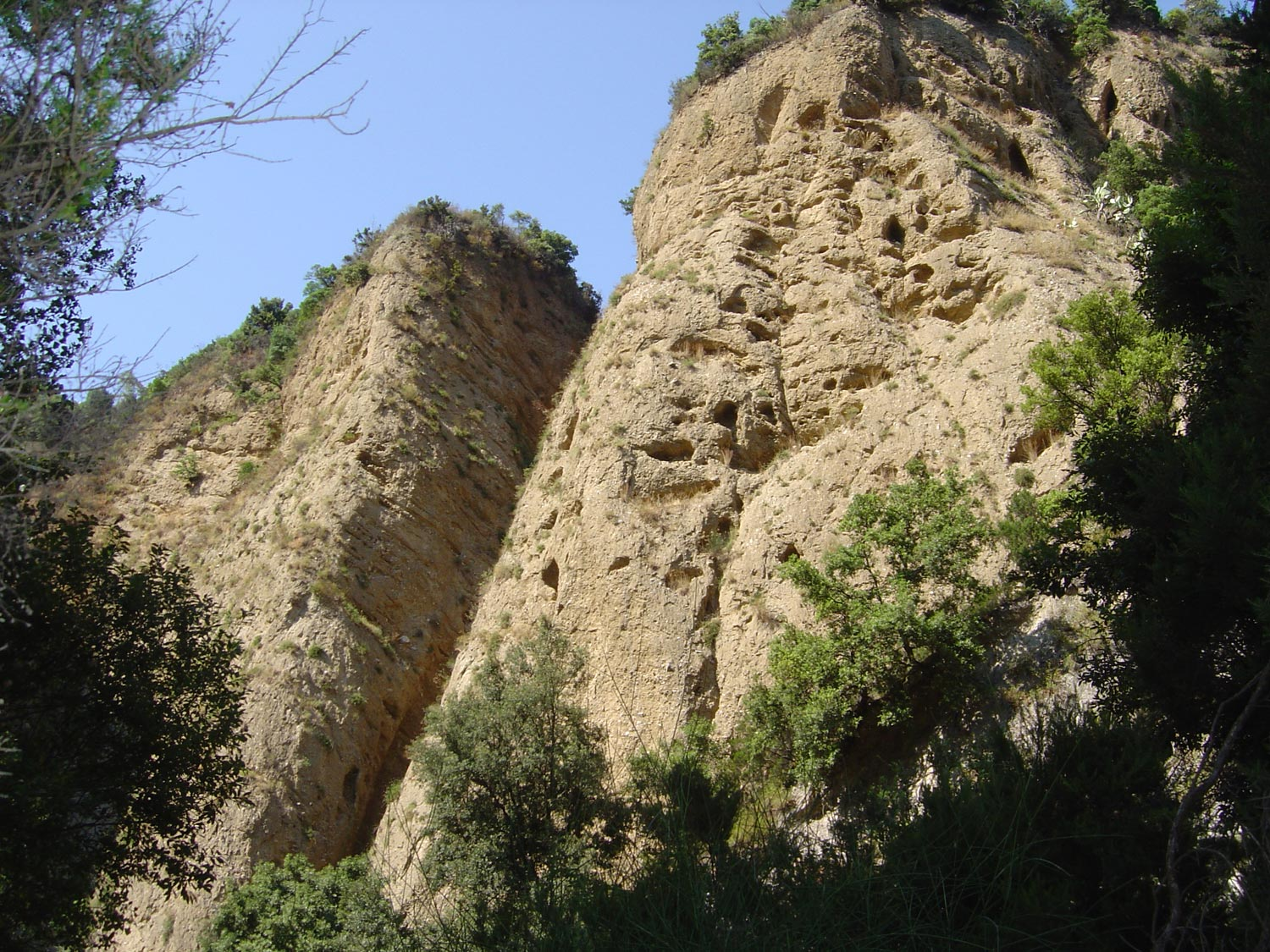 Canyon Valli Cupe