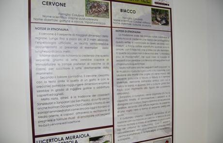 Museo Fauna ed etnofauna