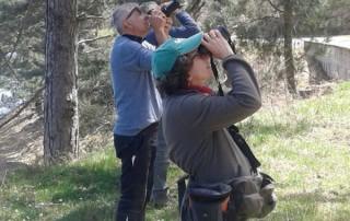 I birder osservano il nostro Scoiattolo nero